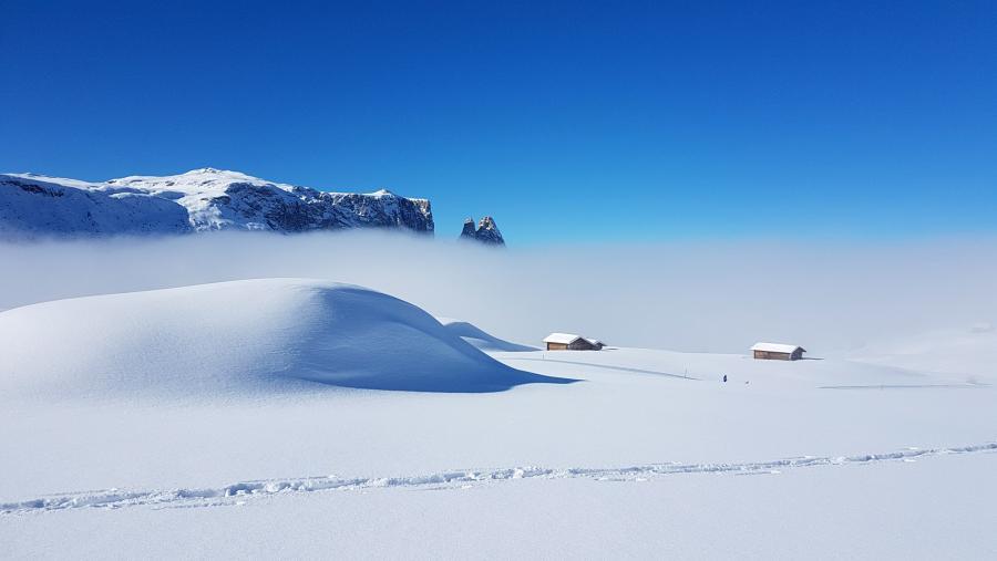 Langlaufsafari in der Region Seiser Alm in Südtirol